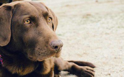 Una nueva vacuna contra la Leishmaniosis que puede salvar la vida de tu perro