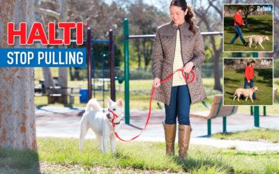 Mi perro tironea, Halti es la solución.