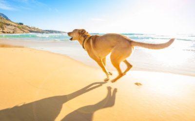 Todas las playas para perros de Málaga 2017