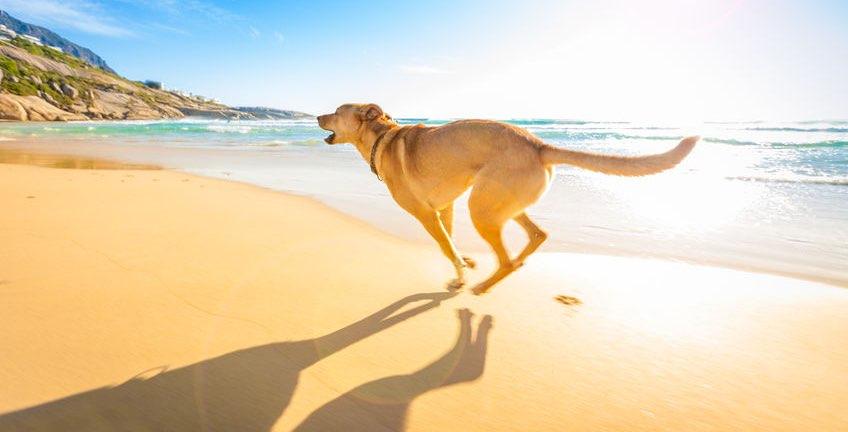 playas de malaga con perros